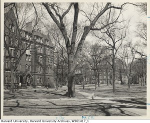 Harvard Yard 1930.  Time stands still.